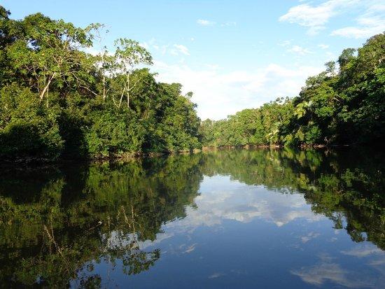 Inmensa estepa verde amazónica