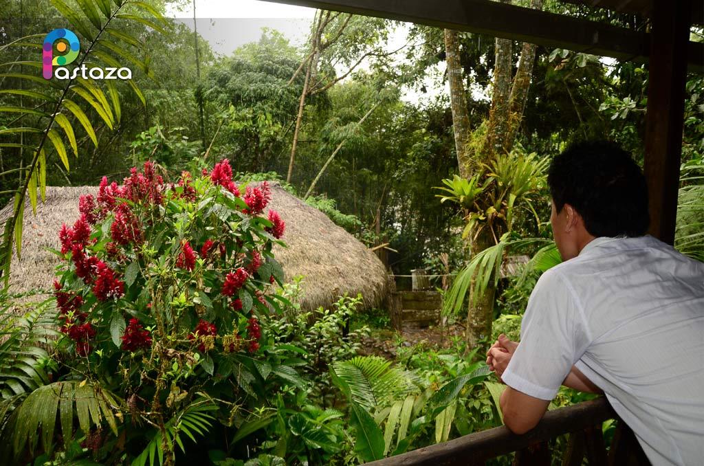 omaere amazonia turistica
